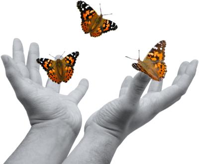 Hands Releasing Butterflies